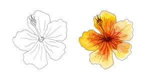 Tropische orchidee, rode bloem met oranje en gele aders op witte achtergrond stock illustratie
