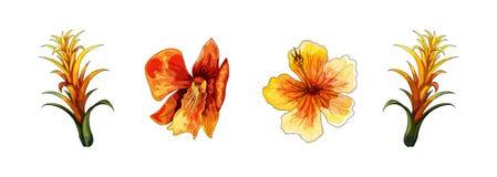 Tropische orchidee, rode bloem met oranje en gele aders op witte achtergrond vector illustratie
