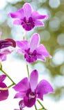 Tropische Orchideebloem Stock Foto