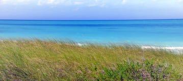 Tropische overzees en groen gras Stock Afbeelding
