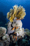 Tropische overzeese koralen royalty-vrije stock fotografie