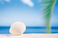 Tropische overzeese shell op wit het strandzand van Florida onder zonli Stock Foto's