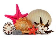Tropische overzeese shells Royalty-vrije Stock Afbeeldingen