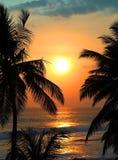 Tropische overzeese zonsondergang en palmen Royalty-vrije Stock Afbeelding