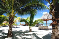 Tropische Palm Beach toevlucht Royalty-vrije Stock Fotografie
