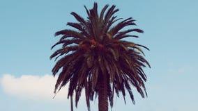 Tropische Palm en hemel Stock Afbeelding