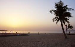 Tropische palm met zonsondergang Royalty-vrije Stock Afbeeldingen