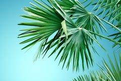 Tropische palmachtergrond Royalty-vrije Stock Afbeelding