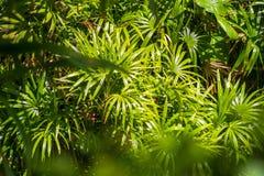 Tropische Palmblätter lizenzfreie stockfotos