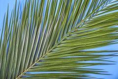 Tropische Palmblätter auf blauem Pastellhintergrund Lizenzfreie Stockfotos