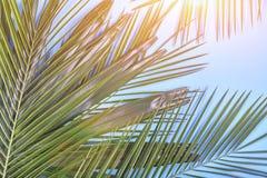 Tropische Palmblätter auf blauem Pastellhintergrund getont Stockbilder