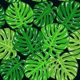 Tropische Palmblätter des nahtlosen mit Blumenmusters des Vektors Lizenzfreie Stockfotos