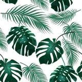 Tropische Palmblätter Dschungeldickichte Nahtloser Blumenhintergrund Lokalisiert auf Weiß Abbildung Stockbilder