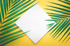 Tropische Palmblätter mit Weißbuchkarte Feld auf Pastell lizenzfreies stockbild