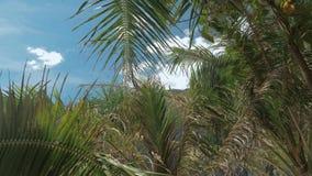 Tropische Palmblätter unter blauem Himmel auf dem tropischen Strand, der in den Wind sich bewegt BlattPalme auf blauem Himmel tro stock video