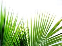 Tropische palmbladen stock afbeeldingen