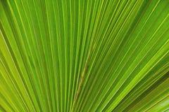Tropische palmbladen Stock Foto's