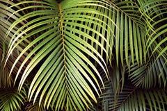 Tropische palmbladen, naadloze bloemen het patroonachtergrond van het wildernisblad Royalty-vrije Stock Foto