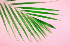 Tropische palmbladen op pastelkleur roze achtergrond Minimaal de zomerconcept De creatieve vlakte legt met exemplaarruimte Hoogst stock foto