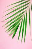 Tropische palmbladen op pastelkleur roze achtergrond Minimaal de zomerconcept De creatieve vlakte legt met exemplaarruimte Hoogst stock fotografie