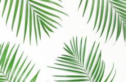Tropische palmbladen op witte achtergrond Minimale aard De zomer royalty-vrije illustratie