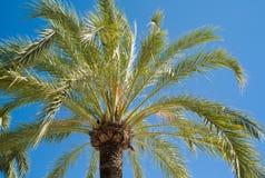 Tropische Palme lizenzfreie stockfotos