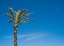 Tropische Palme lizenzfreie stockfotografie