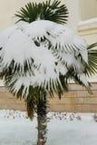 Tropische Palme bedeckt durch Schnee stockbilder