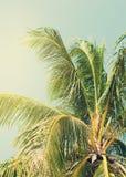 Tropische Palme beleuchtete bis zum dem Sun auf Strand Getonter Hintergrund Lizenzfreie Stockfotografie