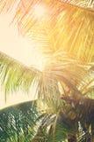 Tropische Palme durch Blatt führt Sun Stockfoto