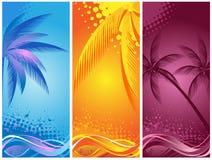 Tropische Palme, Hintergrundsommer Stockfoto