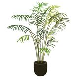 Tropische Palme im Blumentopf Lizenzfreie Stockfotografie
