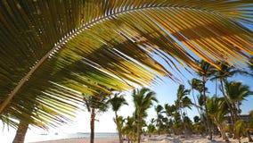 Tropische Palme mit bokeh Sonnenlicht auf blauem Himmel mit Wolken stock video