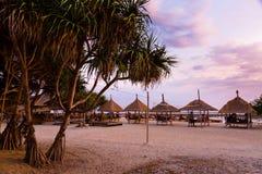 Tropische Palme mit Sonnenuntergang Stockfotografie