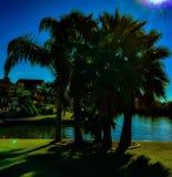 Tropische palmen royalty-vrije stock foto's