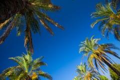 Tropische palmen Royalty-vrije Stock Afbeelding