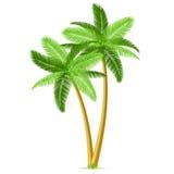 Tropische Palmen stock abbildung