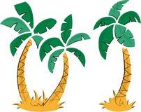 tropische palmen Royalty-vrije Stock Fotografie