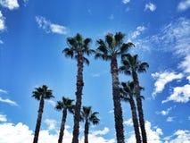 tropische palmen Stock Fotografie