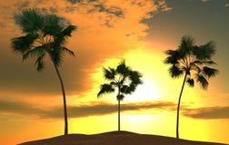 tropische palmen stock foto's