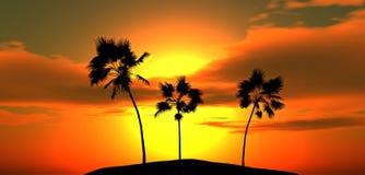 tropische palmen stock afbeeldingen