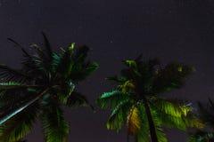 Tropische palmen bij de zomer, mening van de sterhemel Stock Fotografie