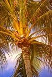 Tropische palmen bij zonsondergang Stock Foto's