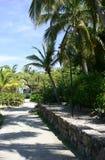 Tropische palmen in de zomer Stock Foto's