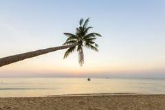 Tropische Palmen des Paradiesstrandsonnenuntergangs Lizenzfreie Stockfotos