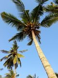 Tropische palmen en duidelijk blauw hemellandschap Stock Foto