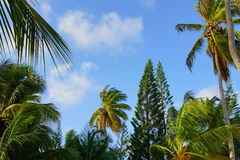 Tropische palmen en hemel Royalty-vrije Stock Foto's
