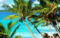 Tropische palmen en oceaan Stock Foto