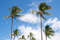 Tropische Palmen gegen den blauen Himmel lizenzfreies stockfoto