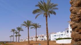 Tropische Palmen gegen den Himmel und das Hotel in Ägypten Hotel-Äußeres in einem tropischen Land stock video footage